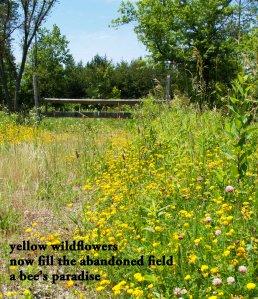 Yellow Flowers Haiku Sm