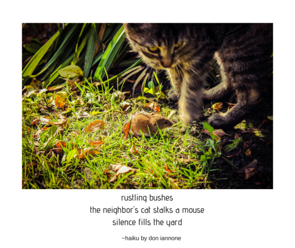 cat mouse haiku.png