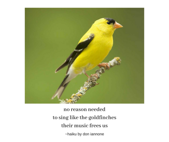 goldfinch haiku.png