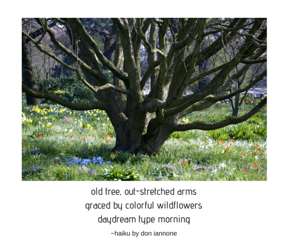 old tree haiku.png