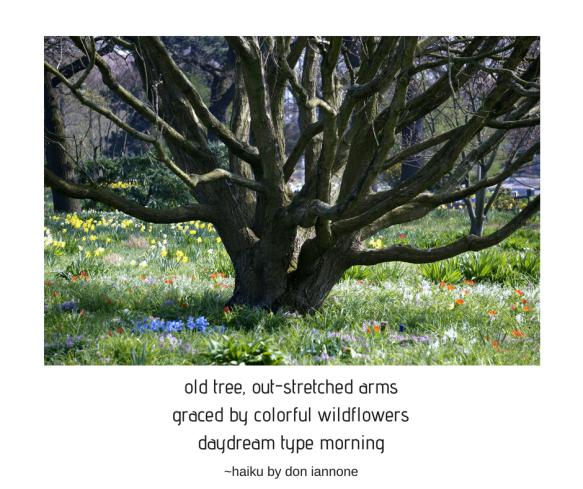 old tree haiku.png