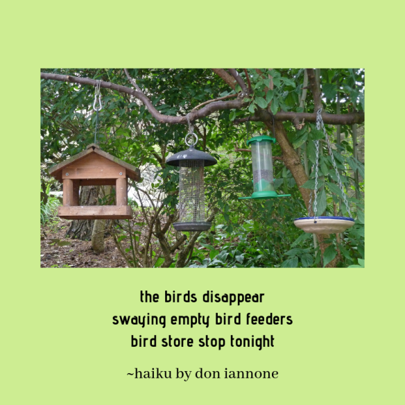 bird feeder haiku