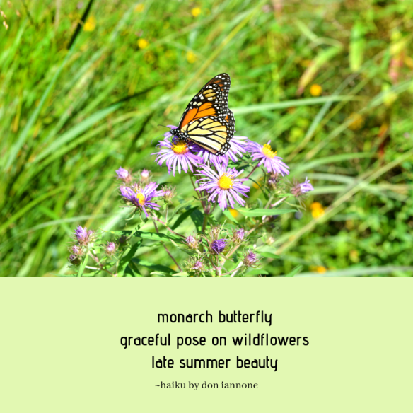 butterfly haiku.png