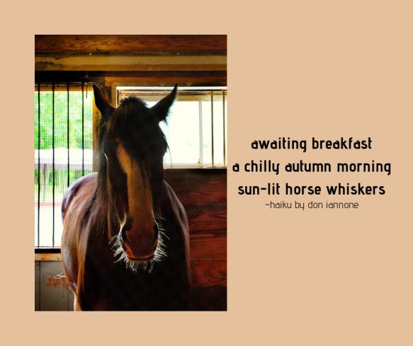 horse haiku.png
