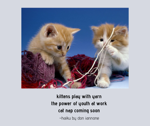 kitten haiku.png