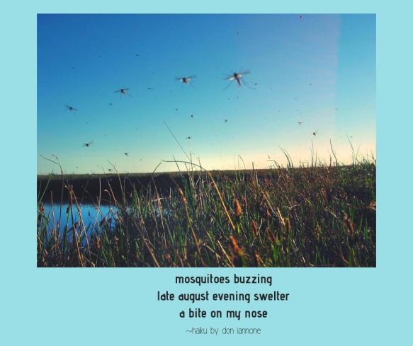 mosquito haiku.png