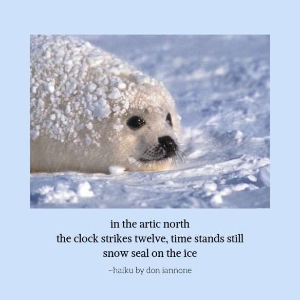 snow seal.png