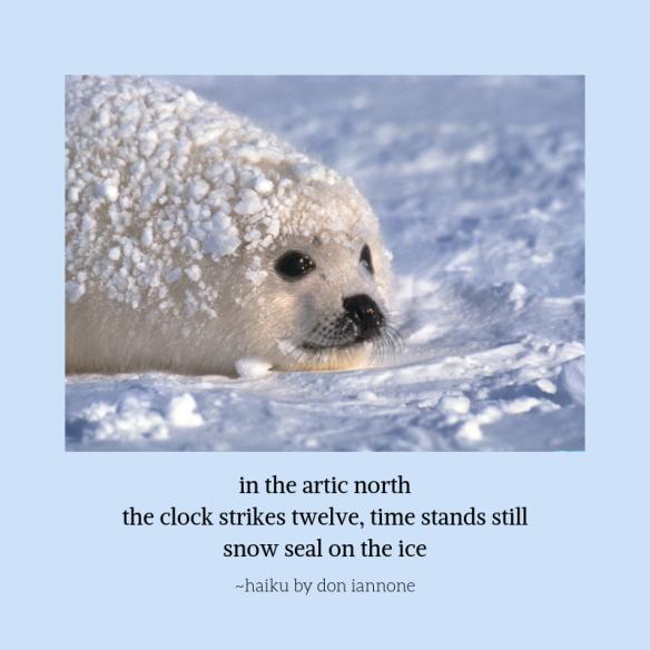 snow seal.png
