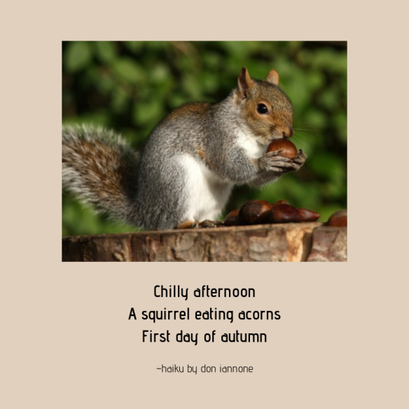 squirrel acorn haiku
