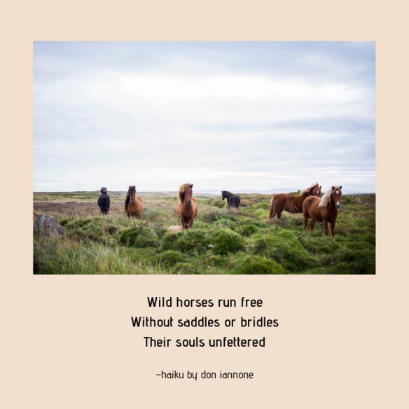 wild horses haiku 9-29-18.png