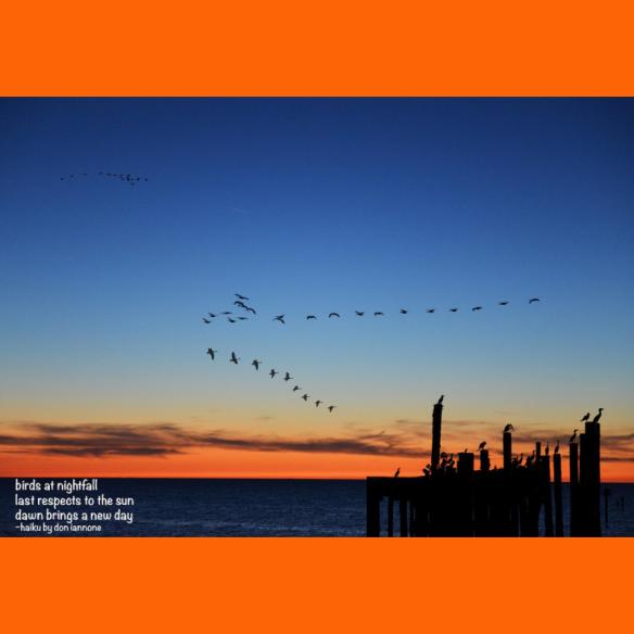 birds nightfall haiku.png
