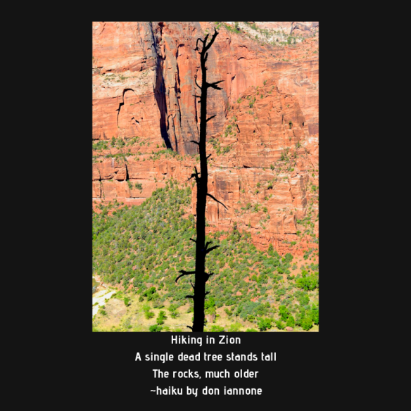 dead tree in zion.png