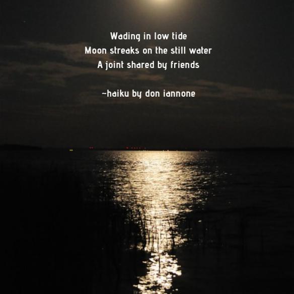 low tide haiku