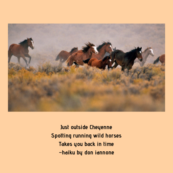 running wild horses haiku