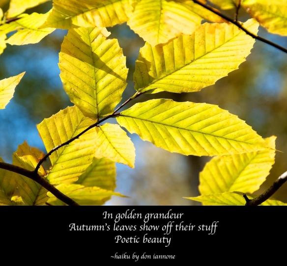 golden leaves haiku.jpg