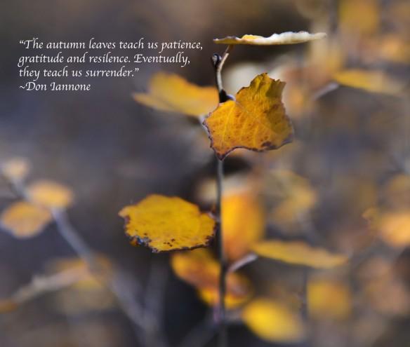 leaves close up haiku small