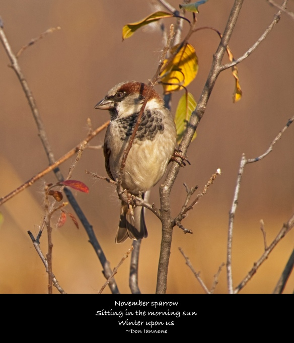 november sparrow