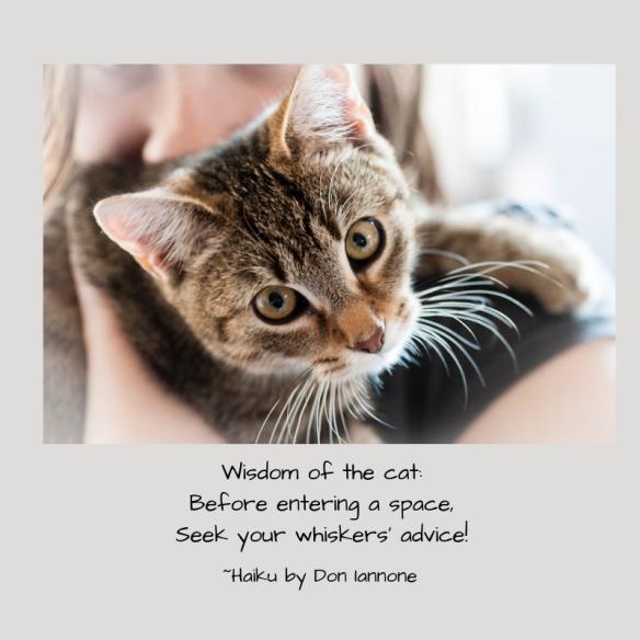 cat wisdom.png
