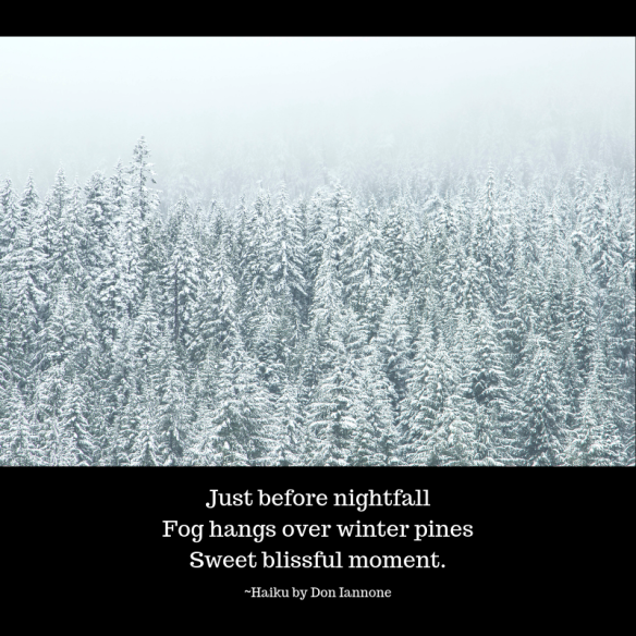 Fog hangs over winter pines.png