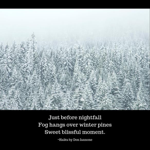 Fog hangs over winter pines.png