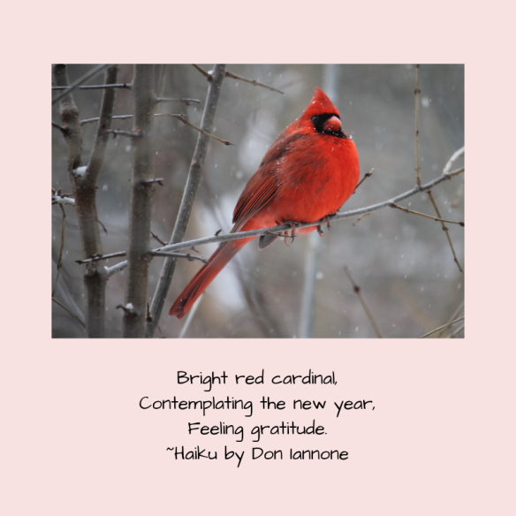 new year cardinal.png
