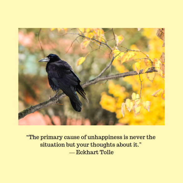"""The primary cause of unhappiness is never the situation but your thoughts about it."" ― Eckhart Tolle"